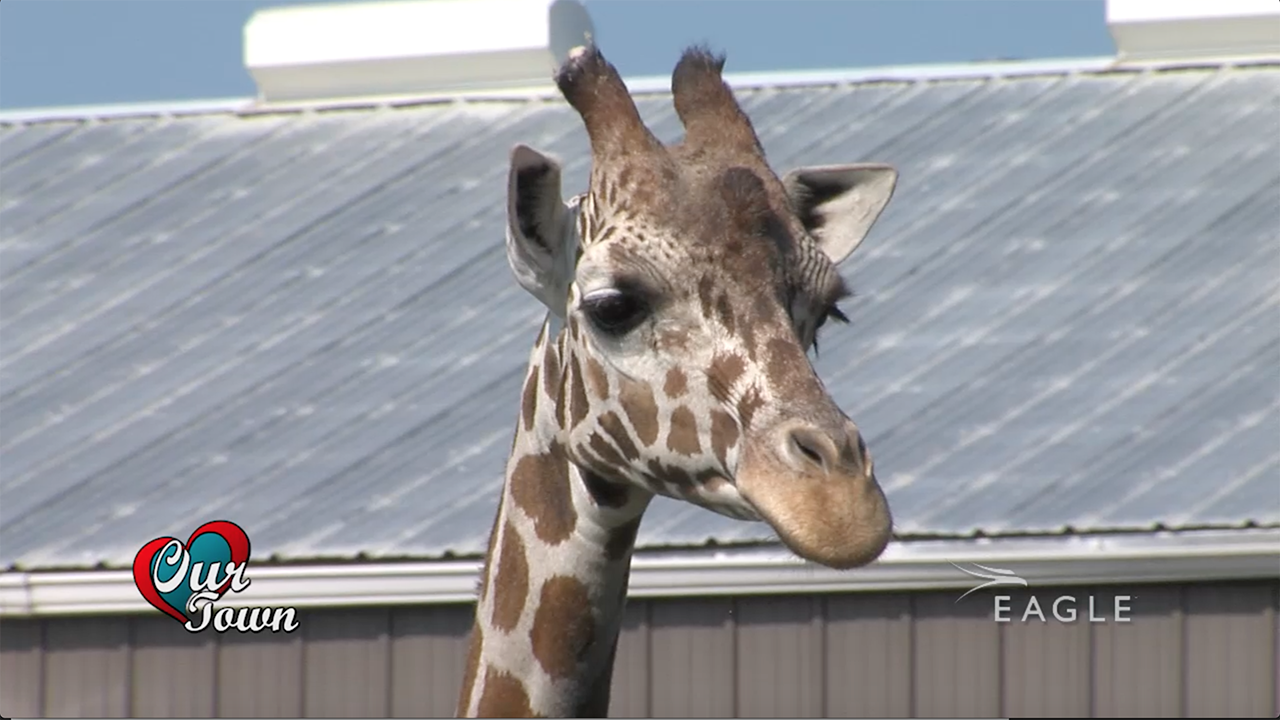 Our Town: Rolling Hills Zoo